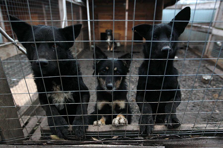 Почему убийцы собак остаются безнаказанными?