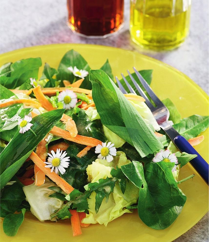 Какие дикие травы можно употреблять в пищу? Рецепты блюд