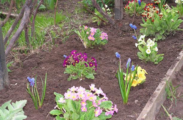 Какие цветы можно сажать весной на даче 34