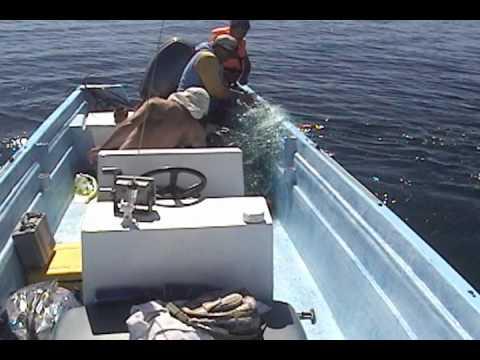 """Кит """"попросил"""" людей освободить его от рыболовной сети"""
