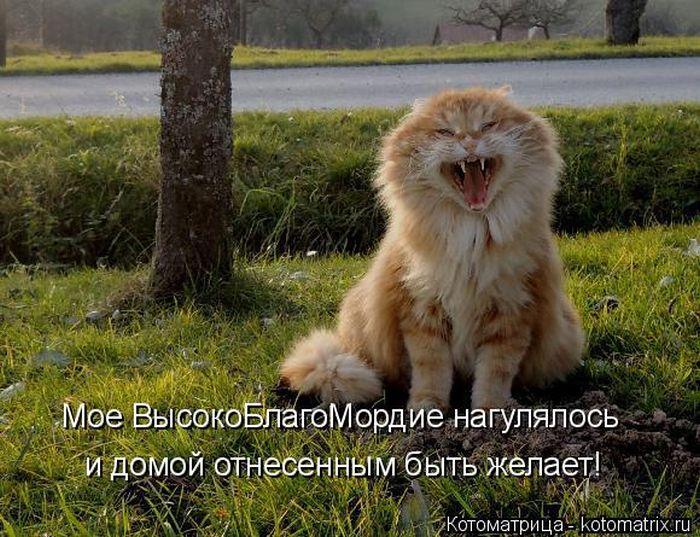 Позитивные картинки для настроения