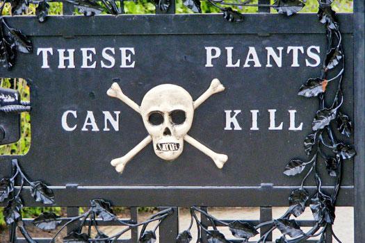 68744528_most_dangerous_plants_2 - Илюза Таджиковна Кривицка…