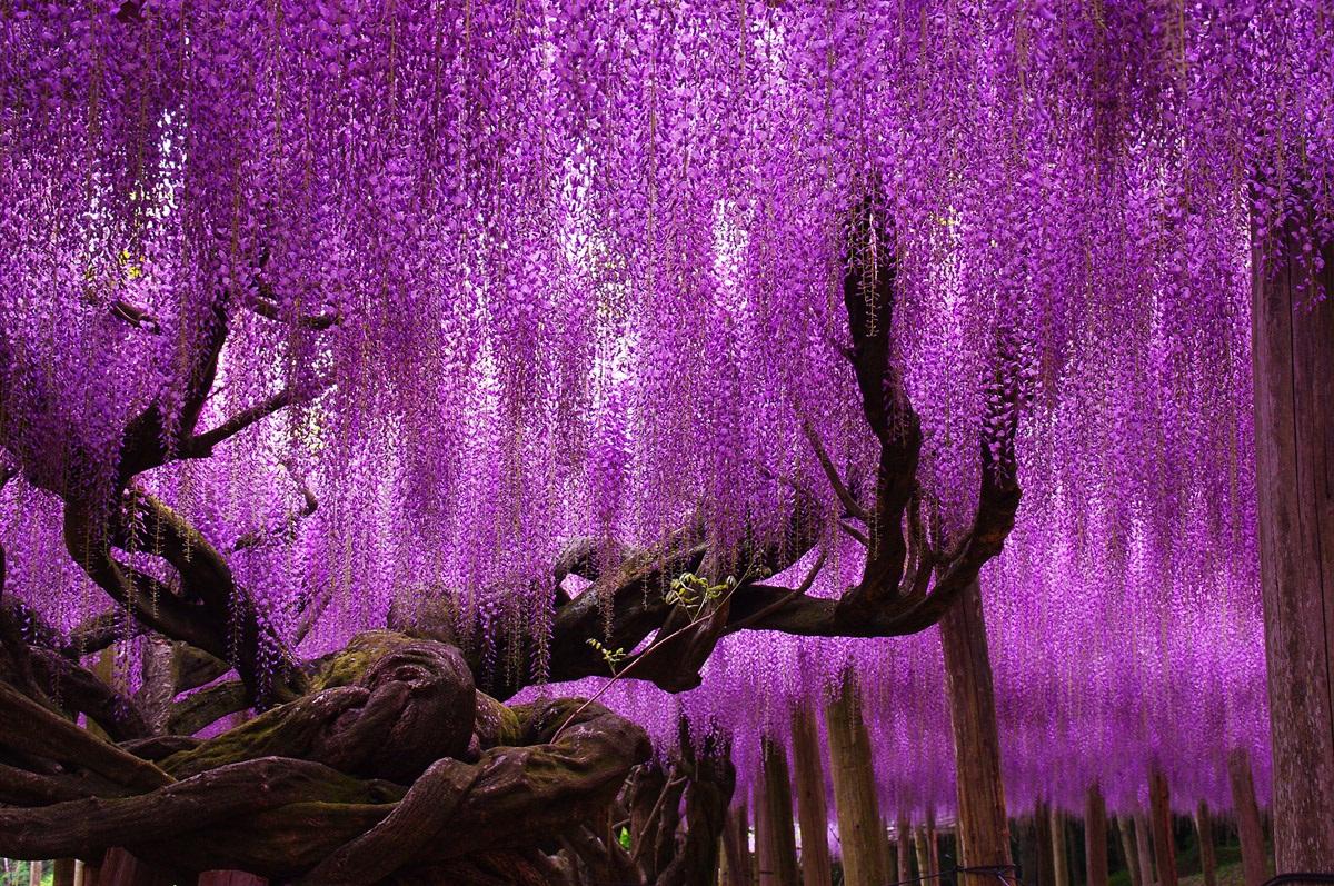 Цветочная сказка Японии цветы, япония