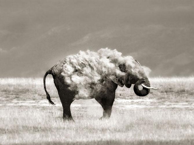 """Животные """"невиданной красы"""" на фотографиях Марины Кано"""
