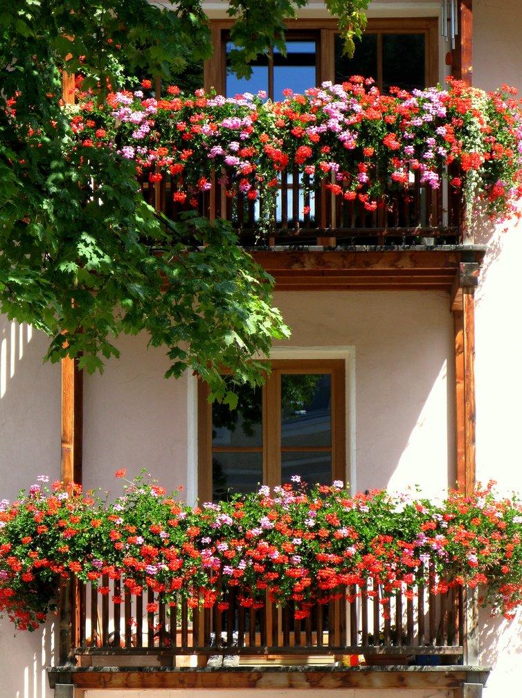 Цветочные окна.