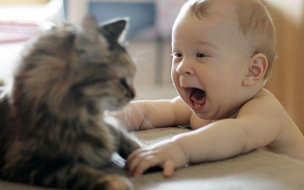 Малыш начал плакать. То, как…