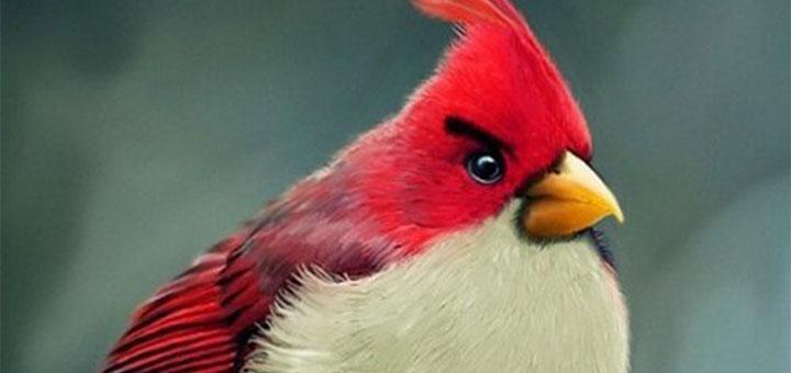 10 реально существующих «злых птичек»