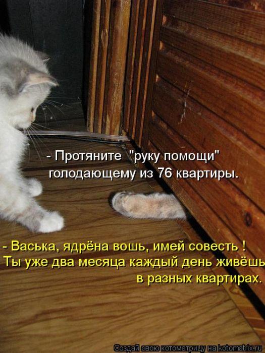 Котоматрица №32