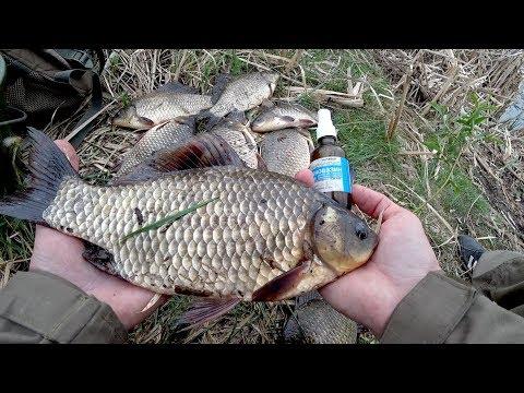 Они сгибают удочку в дугу! Крупный Карась на масло. Рыбалка 2018.