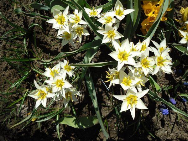 Шикарные цветы для дачников-новичков