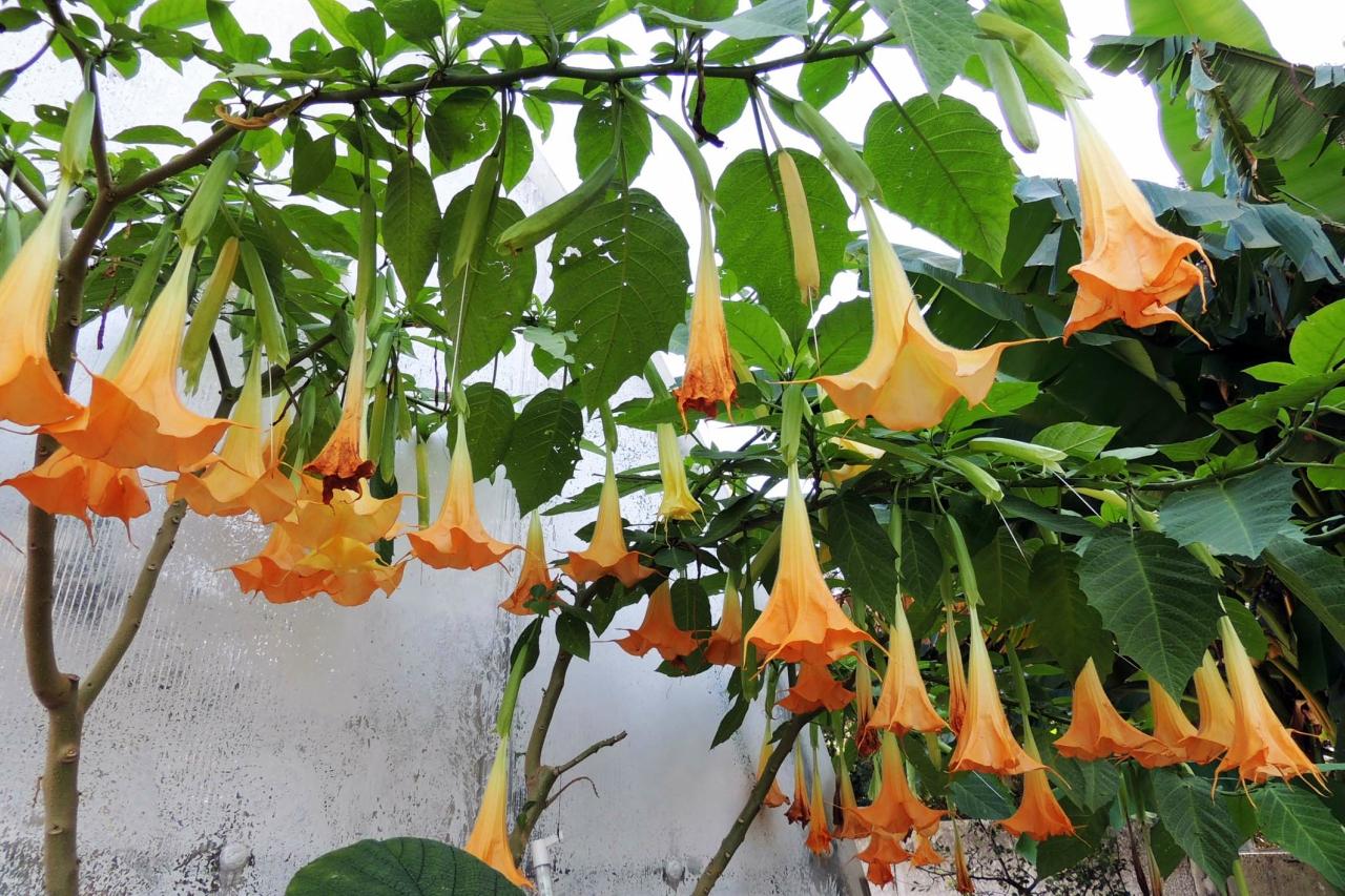 К женскому празднику букет с фотографиями цветов, украшающих парки здравниц