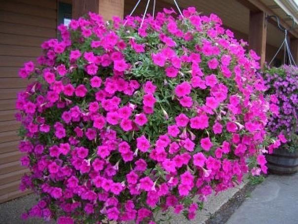 С такими подкормками ваши цв…