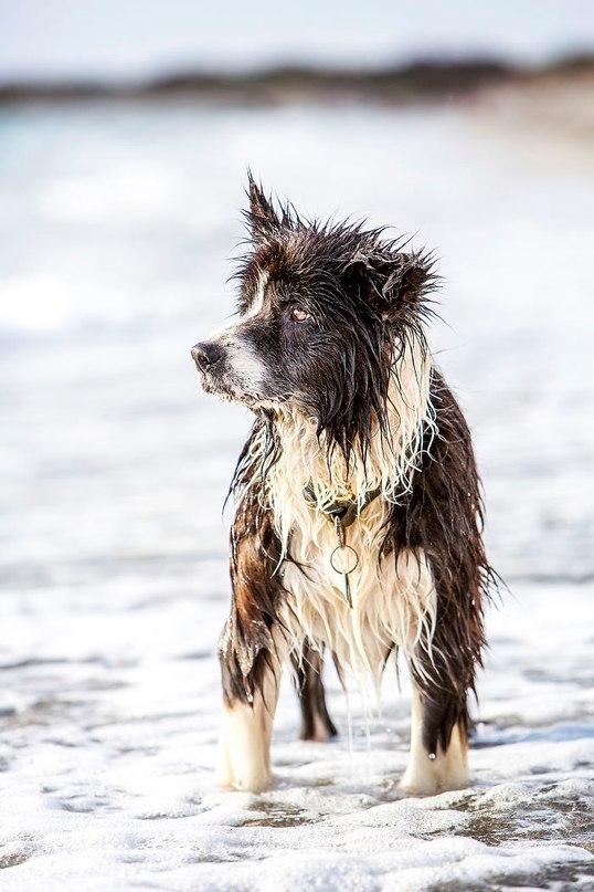 Собака вернулась к хозяину после семи лет скитаний.