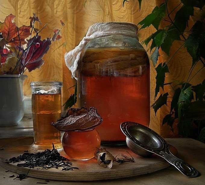 Как вырастить чайный гриб с нуля дома