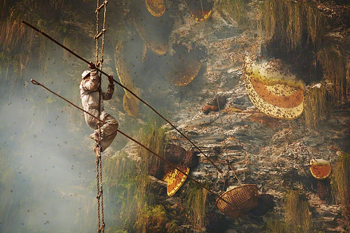 Опасная работа «охотников за мёдом»