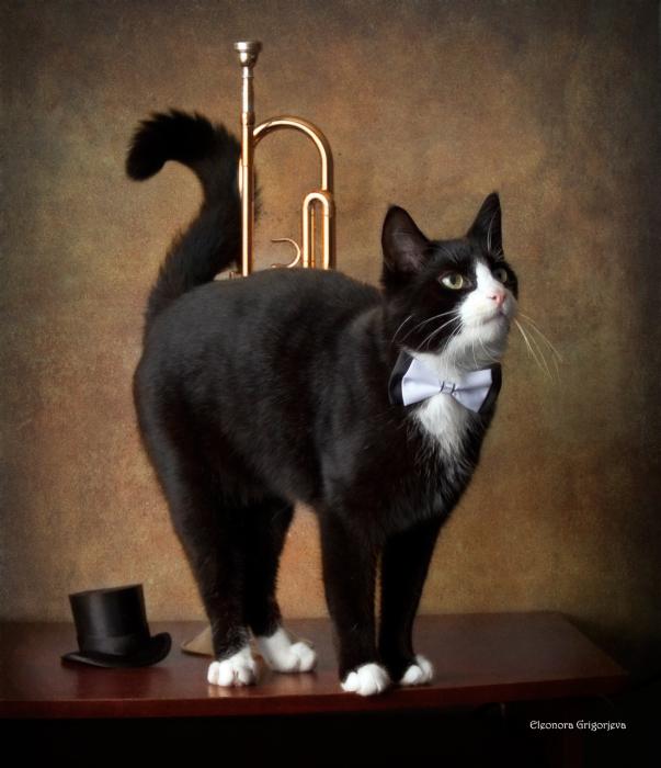 Кот, который играл на трубе. / Фото: Элеонора Григорьева.