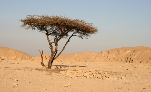 pritchi o zhizni  Притча о жизни: Укрытие в ветвях сухого дерева