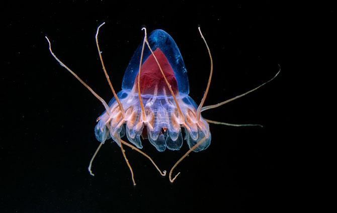 Обитатели океанских глубин