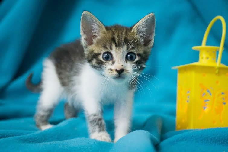 Пятничный котенок Ося – вдохновение и отвага