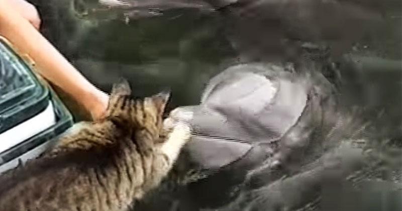 Кот подошел к дельфину. Дальше произошло то, что вызвало всеобщее восхищение в Сети!