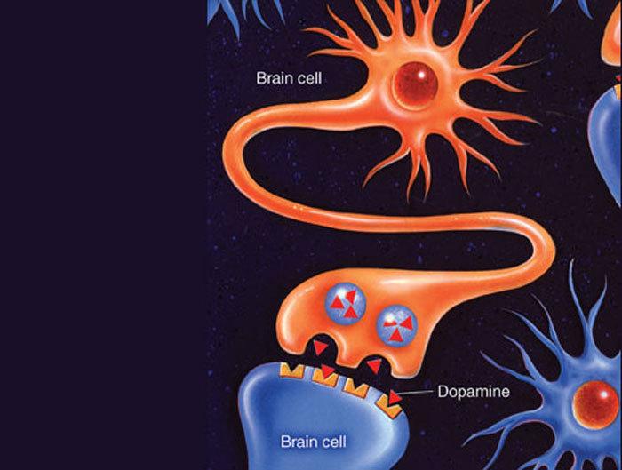 Уровень дофамина: как вернуть себе настоящее удовольствие.