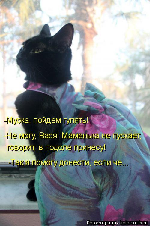 Котоматрица: -Мурка, пойдем гулять! -Не могу, Вася! Маменька не пускает, говорит, в подоле принесу! -Так я помогу донести, если че...