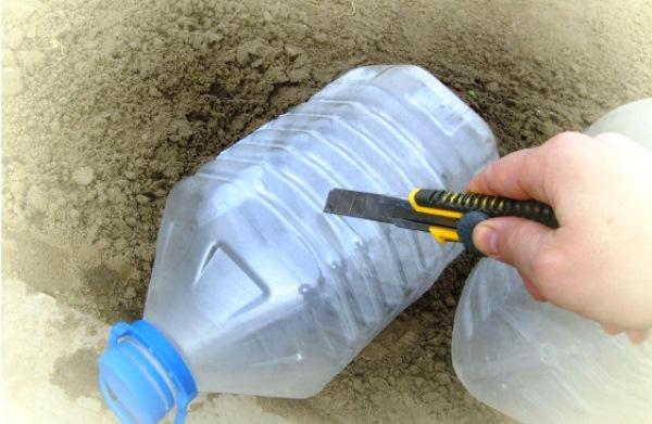 Как подготовить тару под рассаду