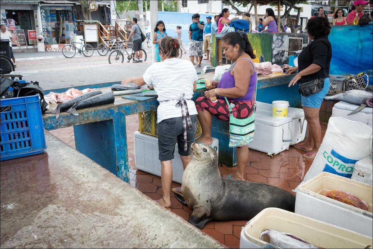 Рыбный рынок на Санта Крусе