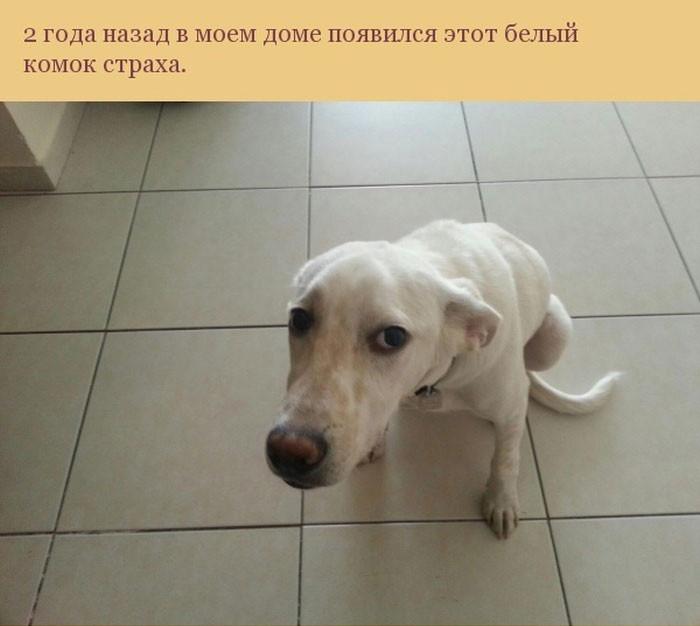 Добром за добро — этот пес …