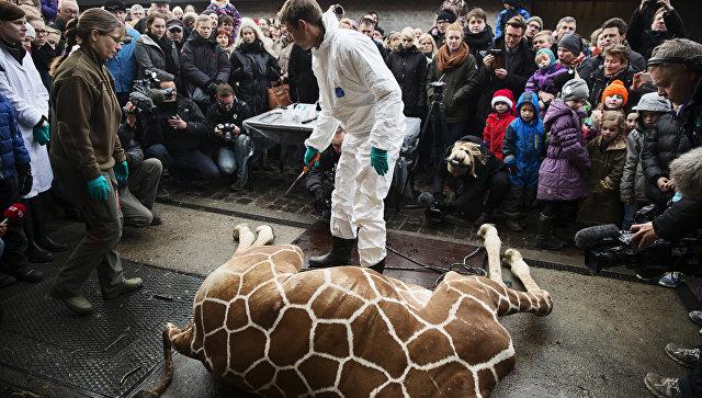 Обиделись из-за жирафа: Дания хочет дать отпор России