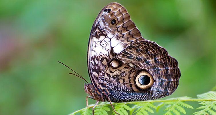Бабочка с самым страшным коконом, к которому вы вряд ли захотите приблизиться