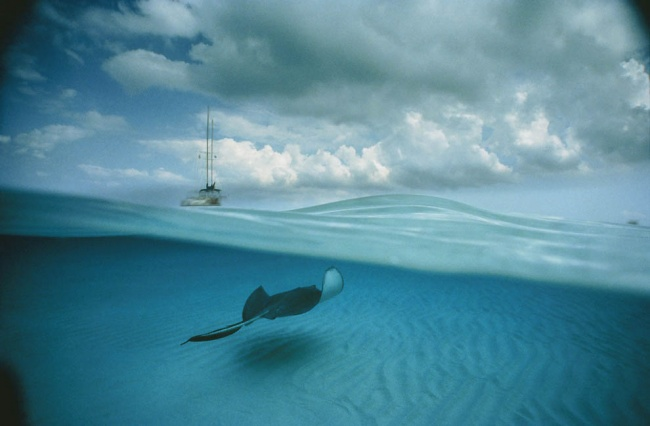 Подводный мир  Дэвида Дубиле.