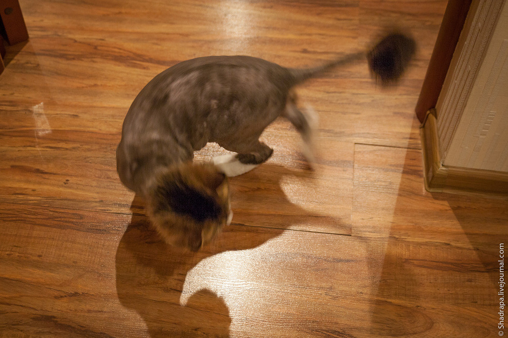 Как я побрил кота животные, коты, юмор