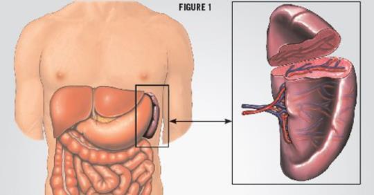 7 частей тела, без которых вы можете жить