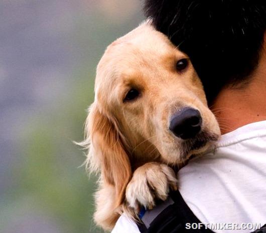 Чему людям стоит поучиться у собак