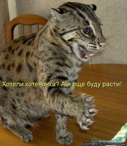 Юморная котоматрица 29