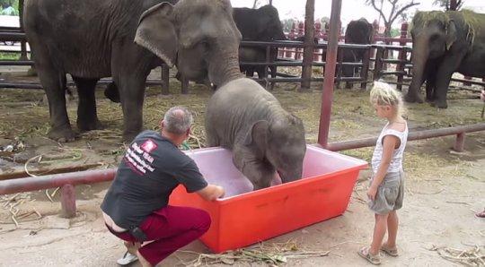 Слонёнка искупали в ванне - водный позитив))