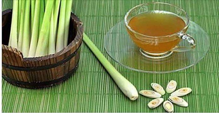 Как сделать чай из лимонной травы, чтобы избавиться от дрожжевой инфекции и исцелить пищеварительную систему