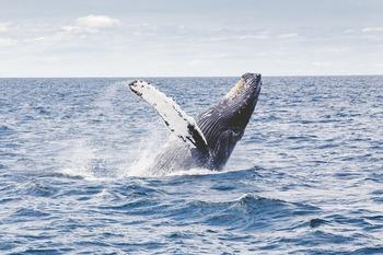 Жители Петербурга обсуждают кита, снятого на видео в Выборгском заливе