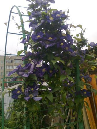 Прогулки по саду наших читателей: сад Любови Тепловой