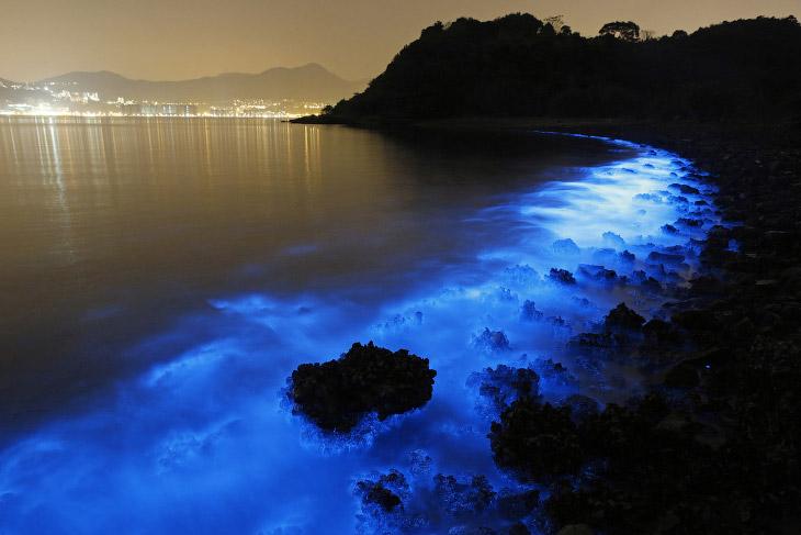 Свечение живых организмов в море Гонконга