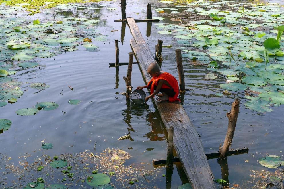 К югу от Янгона, Мьянма набирают воду для питья из озера с кувшинками