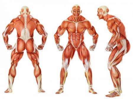 10 защитных систем нашего организма, 10 protective systems of the body