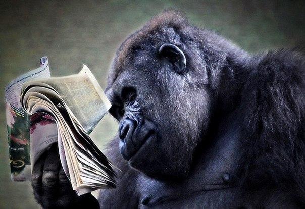 Не читайте новости