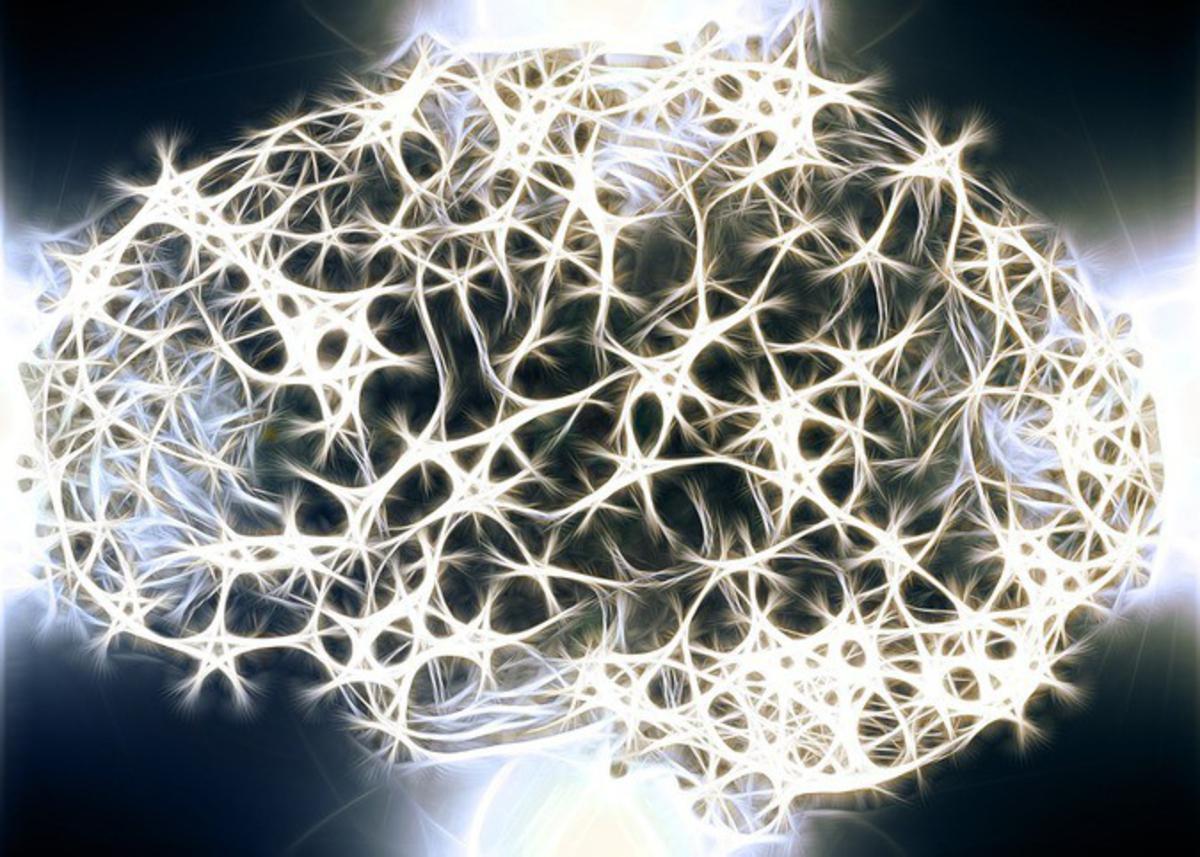 Найден новый тип клеток в мозге человека