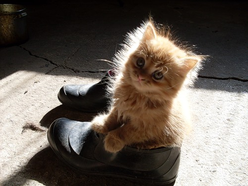 Для чего нужна кошка в доме? Original