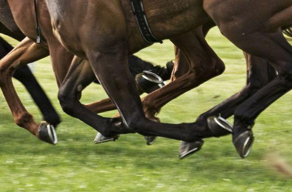 Ученые определили, зачем лошадям копыта