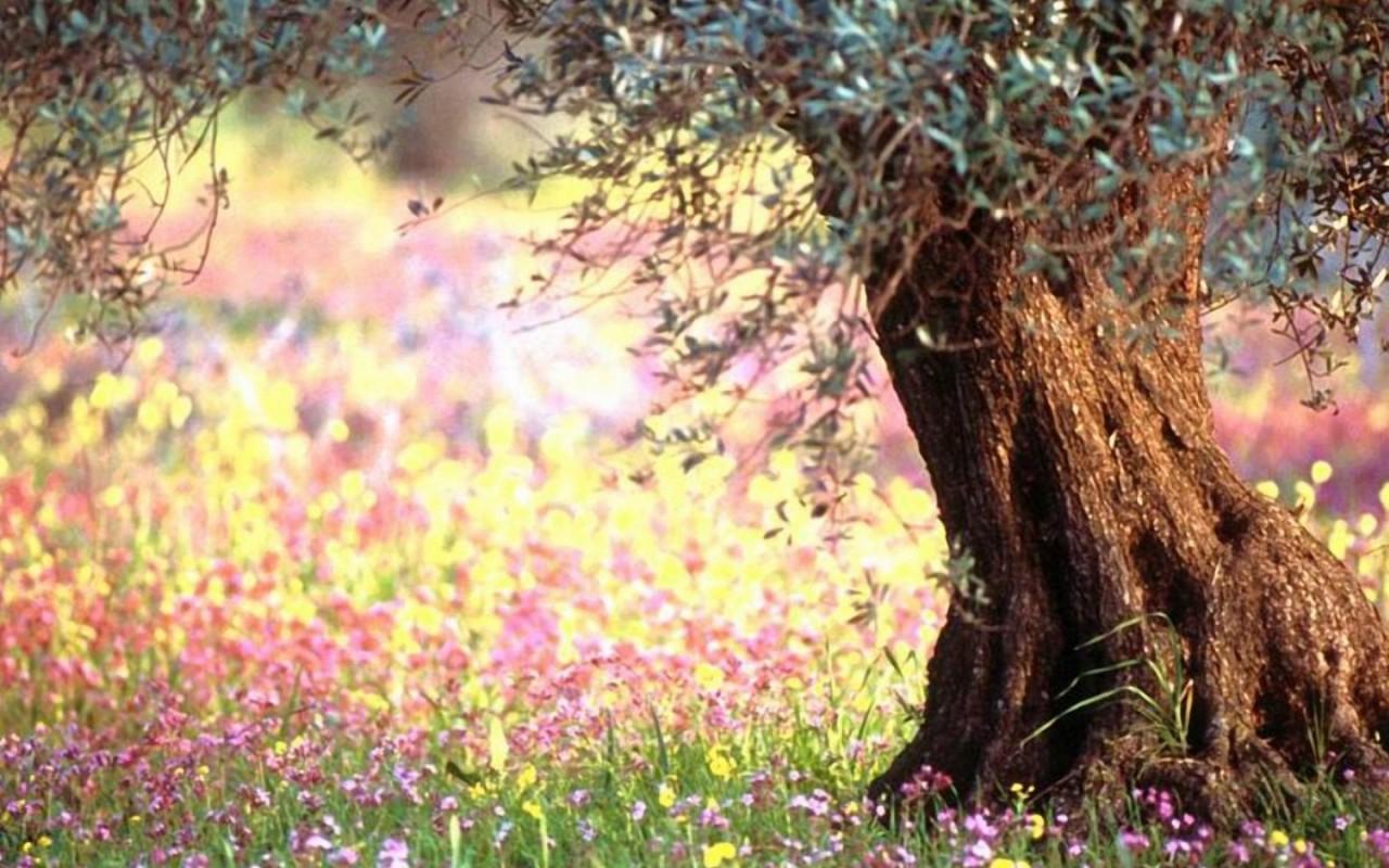 Скачать Весна фото аватарки 3