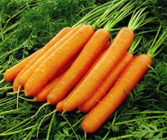 Морковь - маленькие серкеты богатого урожая