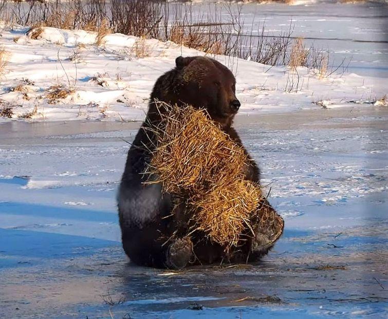 Этот медведь никогда не был так счастлив))